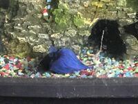 64l fish tank with fish