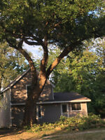 Tree Cutting &Trimming Services