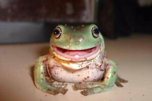 Several Frogs for sale