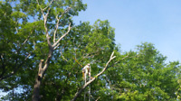 Undercut Tree Service