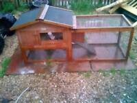2 baby ferrets plus hutch