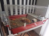 2 Male Long Haired Guinea Pigs And Cage