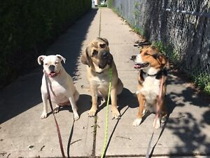 Professional Dog Walker Available for Walks in Clarington