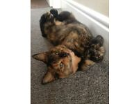 female cat, free to loving home