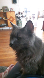 Good home wanted for a 7 year old cat (not friendly to cats)