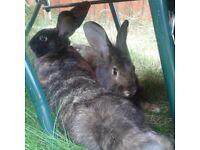 Rabbit Hotel..... Bunny sitter