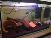 Fish set up