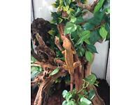 Crested gekos and vivarium