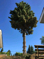 Tree trimming and Tree removel services