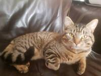 Cat 9 month old free 2 a good home
