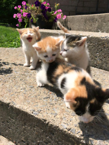 Litter of cute  kittens for sale!