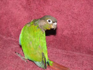 For Adoption at New Wings Bird Rescue & Sanctuary