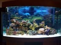 180l bow front marine fish tank