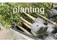 Tree care. Cutting/planting/pruning