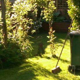 Handyperson/ garden ground/ garden tidy up on regular basic