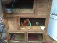 5 Chickens and a chicken coop for sale