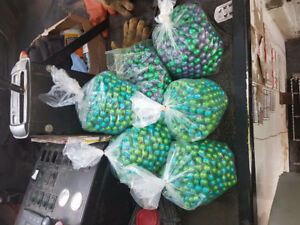 Lots of paintballs. 6 bags. Make me an offer.