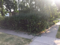 Blade & Spade Landscaping Services
