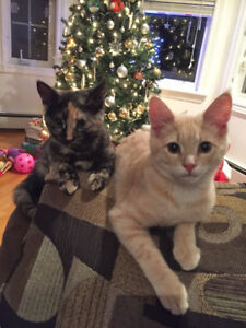 Two Cats for Rehoming