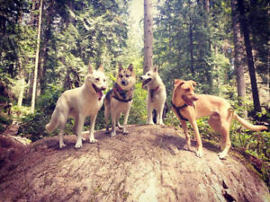 WILDCOAST WALKIES - The North Shores WILDEST offleash adventures