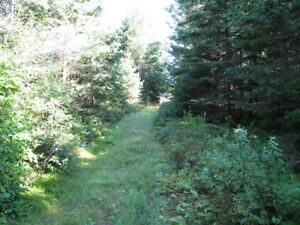 Vacant corner lot treed with assorted pines