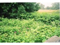 Japanese Knotweed and other Invasive Weeds Services