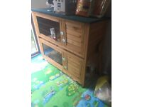 2 female Guinea pigs with double hutch