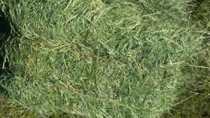 In field Orchard grass, Rye grass 4.50 each. Over 100 4.00 each