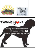 Monthly Pet Adoption Event at the Market on Macleod