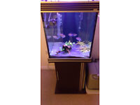 Aqua One Cube Fish Tank with Cabinet