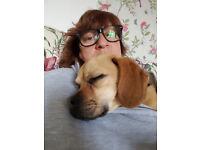 Doggy walks/pet feeding services