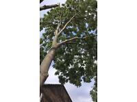 TREES SURGEONS
