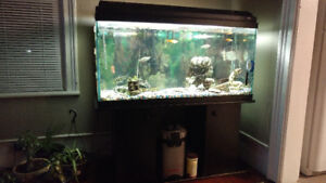 80 gallon fish tank with stand, Fish and accessories *reduced!*