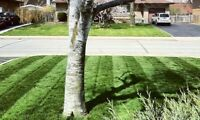 Let our Passion work for you!  Lawn and Property Maintenance