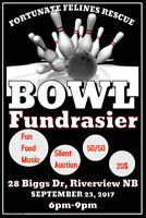 Bowling For Cats Fundraiser