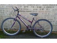 One female purple Max Raleigh and one male grey Salamander Raleigh bike on sale