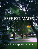 Tree Removal/Pruning/Yard Cleanup