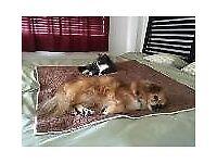 Pet sitter/Dog walker available.