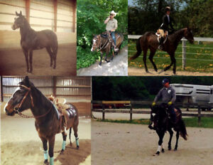 7 YO Mare for LONG TERM Part Board/Lease