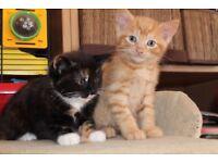 4 lovely kittens