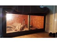 13ft Burmese Python and Vivarium