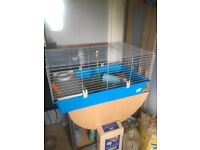 2x 10 week old guinea pigs for sale with cage and all accessories