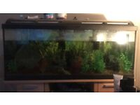 Fish Tank 160Litre Marina with accessories