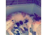 4 kittens and cat for sale