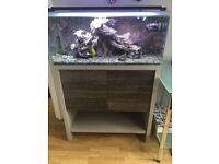 Marine aquarium, full set up.