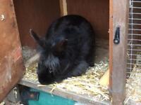 Free rabbit and hutch