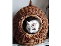 Wicker cat/small animal igloo