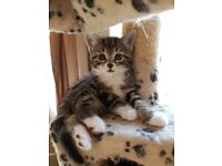 3 beautiful kittens for rehoming