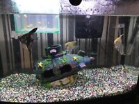 64 litre fish tank for sale with fish ful setup