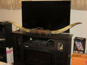 Authentic 6 foot Texas Longhorns